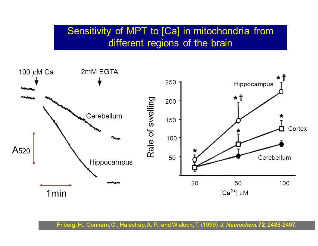 Sensitivity of MPT to [Ca] in mitochondria from different regions of the brain